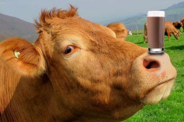 Περίπου το 7% των Αμερικανών πιστεύει ότι το σοκολατούχο γάλα βγαίνει από καφέ αγελάδες, σύμφωνα με έρευνα