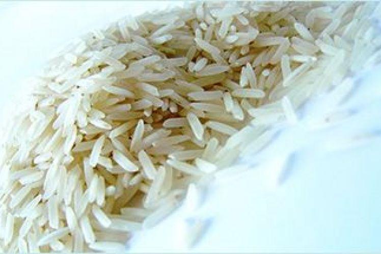 Σε λίγες ημέρες ξεκινά η συγκομιδή ρυζιού, καλύτερες τιμές σε σχέση με πέρσι θέλουν οι παραγωγοί