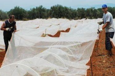 Αλλαγές στις ημερομηνίες υποβολής των αιτήσεων για το πρόγραμμα των νέων γεωργών ανακοίνωσε το Υπουργείο Αγροτικής Ανάπτυξης