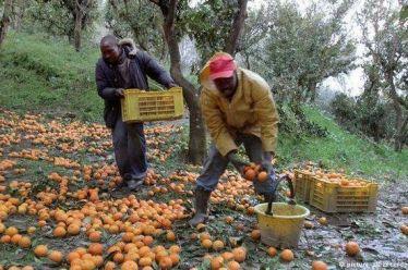 Τα πορτοκάλια της μαφίας