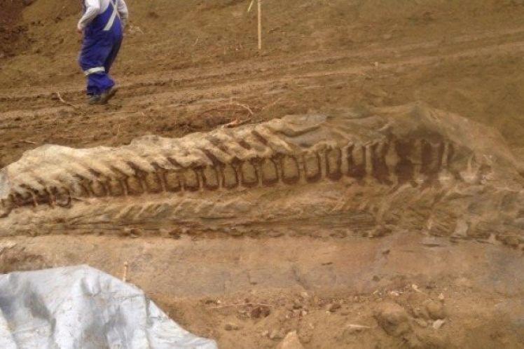 Αργεντινή: Ανακαλύφθηκε γιγαντιαίος δεινόσαυρος ηλικίας μεγαλύτερης των 200 εκ. ετών