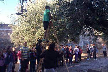 «Τοπικά Αγροδιατροφικά Προϊόντα στο Δήμο Αγρινίου: Ανάδειξη και Αξιοποίηση»