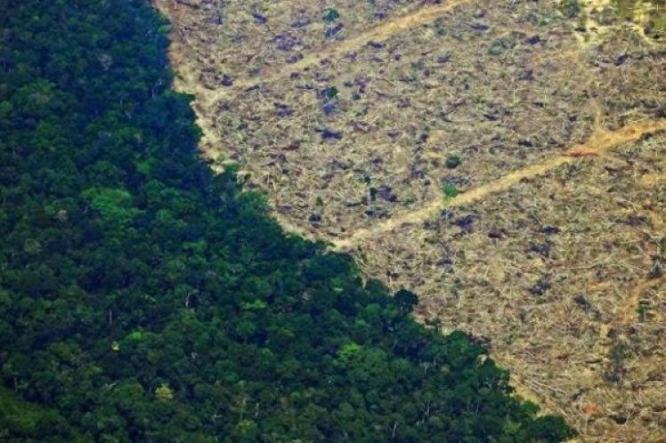 Αμαζόνιος: Ξεπέρασε τα 10.000 τετραγωνικά χιλιόμετρα η επιφάνεια δάσους που αποψιλώθηκε