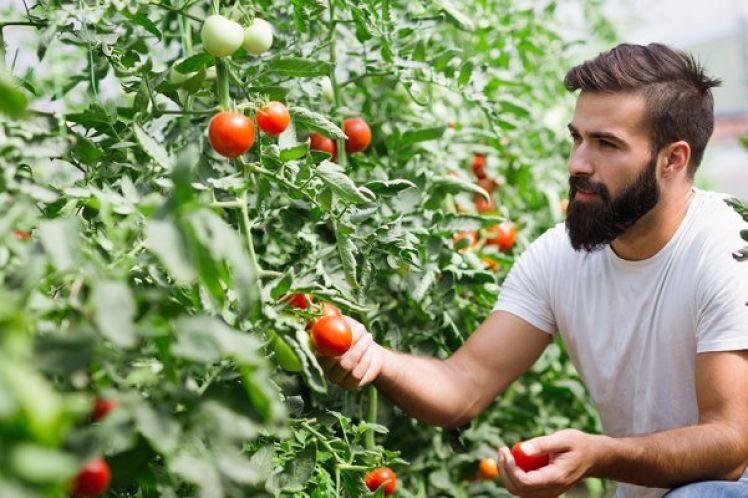 Πως θα μπορούσε να ήταν το επόμενο πρόγραμμα Νέων Αγροτών;