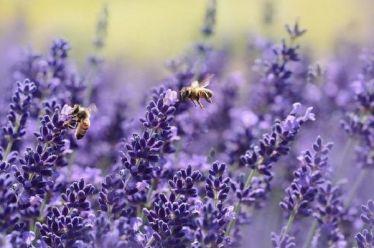Η κλιματική αλλαγή «χτύπησε» και τις μέλισσες