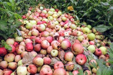 Σπατάλη τροφίμων: Ο μέσος άνθρωπος στη Γη πετάει φαγητό 527 θερμίδων τη μέρα