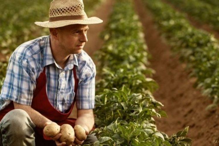 Μέχρι και δύο χρόνια καθυστέρηση απονομής σύνταξης σε αγρότες, 40.000 εκκρεμείς αιτήσεις